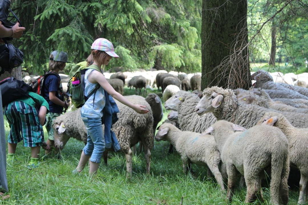 Auf zu neuen Schafen_SPIELkultur (3)